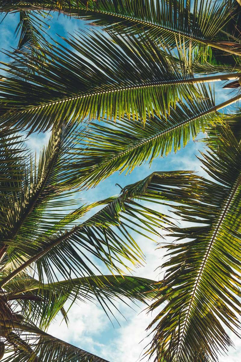 Boulevard Towers palm tree stock